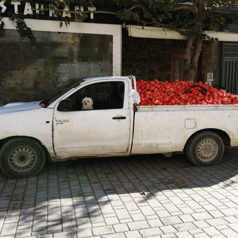 Tomato truck
